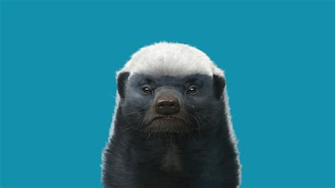 honey badger meh ro