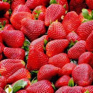 come piantare le fragole in vaso come coltivare e piantare le fragole arrangiamoci