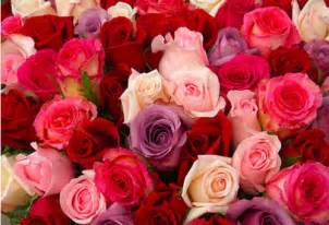 Pink And Red Roses Red And Pink Roses Pictures Photos And Images For Facebook Pinterest And Twitter