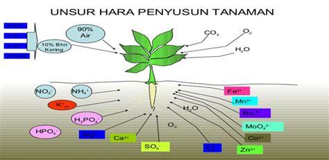 Pupuk Kalsium Nasa mengenal gejala kekurangan unsur hara pada tanaman