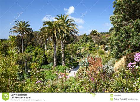 tropischer garten tropischer garten stockfotografie bild 23560862
