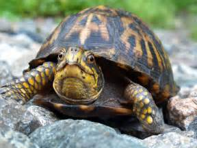turtle meaning and interpretations stop