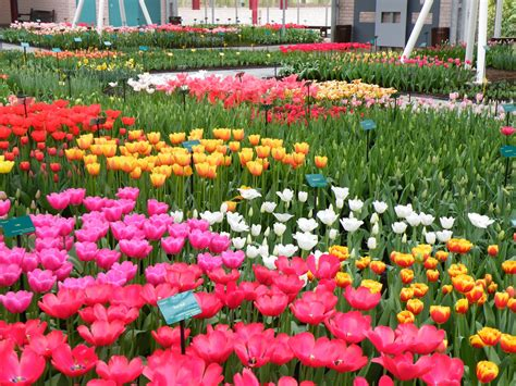 Garden Beautiful Flower Keukenhof S Most Beautiful Flower Garden Travelvivi