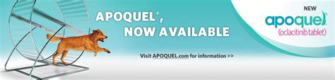 allergy medicine apoquel apoquel alert serious side effects of new allergy medication veterinary secrets