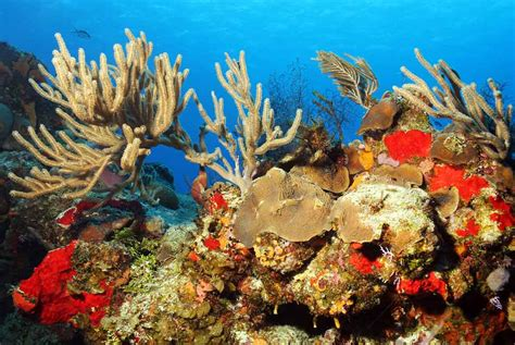 cozumel dive cozumel diving best general information temperatures