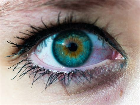 how many colors can the human eye distinguish how much do you about the human eye quizpug