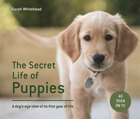 puppies secret the secret of puppies a s eye view of its year of channel 5
