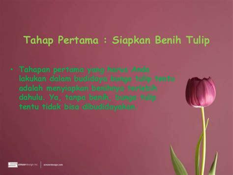 Pupuk Untuk Bunga Tulip cara menanam bunga tulip di indonesia