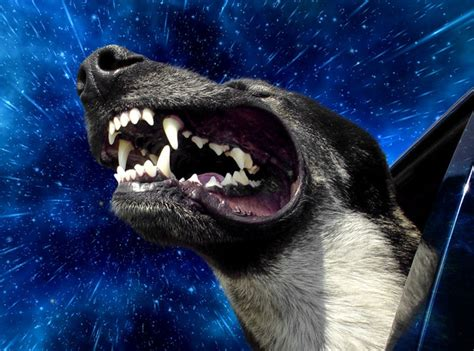 speed dogs warp speed dogs 9 pics we rule the