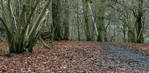 woodland trees woodland trees 7