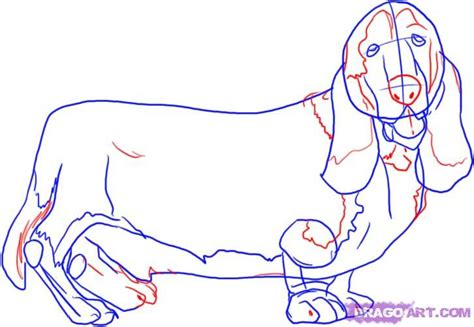 how to a hound how to draw a hound step by step pets animals free drawing tutorial added