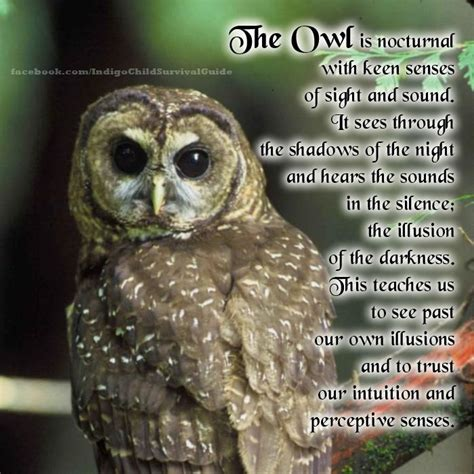 owl symbolism pure spirit pin by mama indigo on animal guides messengers