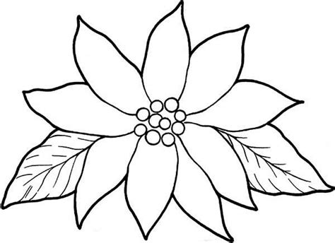 poinsettia coloring page blooming poinsettia coloring page color