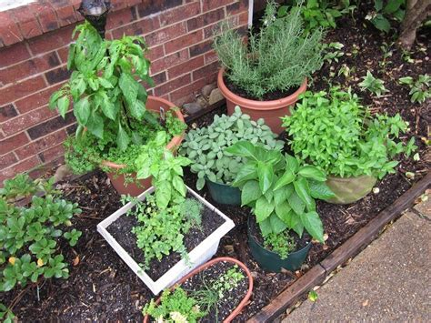 herb garden plants how to plant an outdoor potted herb garden