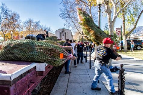 christmas trees in fillmore comes to fillmore the fillmore gazette