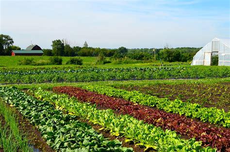 vegetables heritage prairie farm