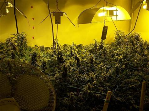 the grow room grow room photographed by 171 cannabis photo gallery