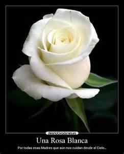 Imagenes de imagen de luto con rosa blanca car tuning