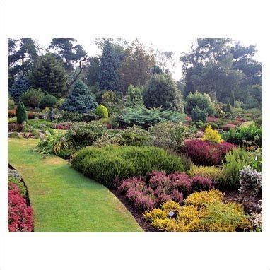 conifer garden design  gap  heather  conifer