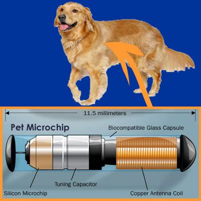 what is a microchip for dogs taiwan animal welfare internship day 15 animal protaction course