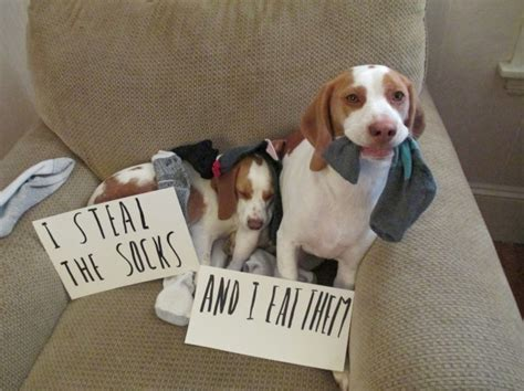 Dog Shaming Meme - 214 best the best of dog shaming images on pinterest