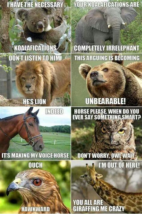 Animal Pun Memes - animal puns cheetah pinterest animal
