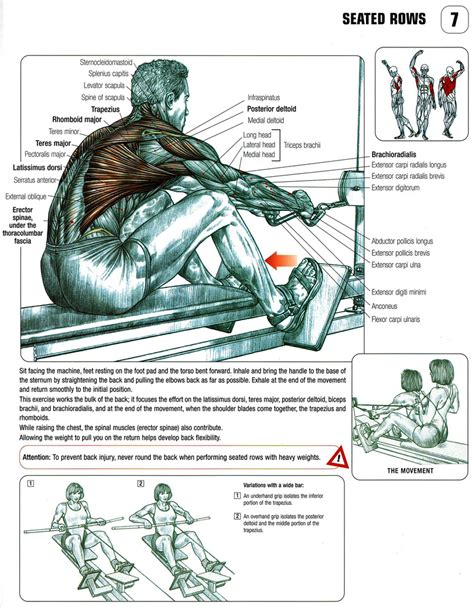 anatomy  wide grip  close grip seated cable row