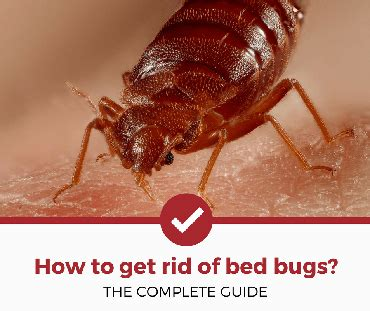 how to get rid of bed bugs in your home get rid of bugs and rodents home and garden help pest