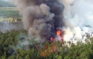 Image result for natural pollutants
