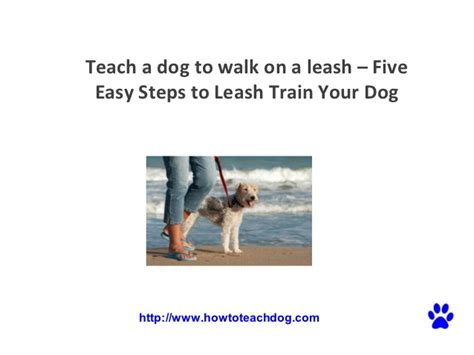 how to your to walk without a leash barking complaint az how to stop your puppy from biting the leash teach