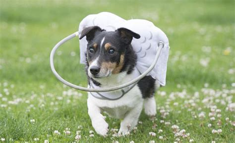 halo for blind dogs this angelic halo protects blind dogs from bumping into things bored panda