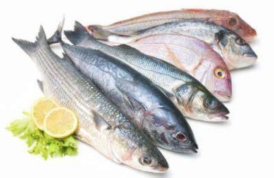 lebih banyak ikan di laut atau bintang di langit kisah 17 nama jenis ikan laut konsumsi populer di indonesia