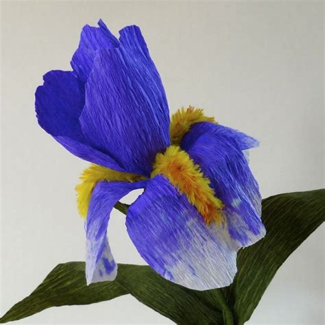 iris pattern types pinterest discover and save creative ideas