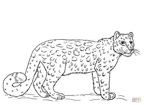 Snow Leopard Coloring Pages snow leopard coloring page free printable coloring pages