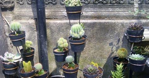 Jual Cermin Hias Bali putra garden paket tanaman hias kaktus mini