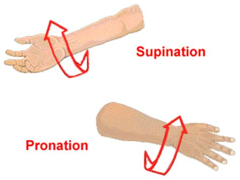 Tarif Pembersihan Karang Gigi istilah kesehatan yang berhubungan dengan pergerakan tubuh
