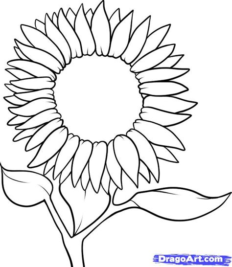 Outline Of Sunflower To Colour sunflower outline clipart best