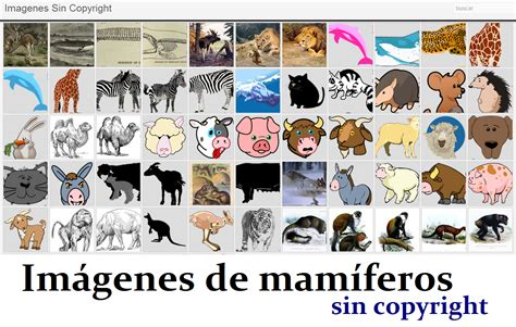 imagenes gratis sin derechos de autor im 225 genes de mam 237 feros sin derechos de autor