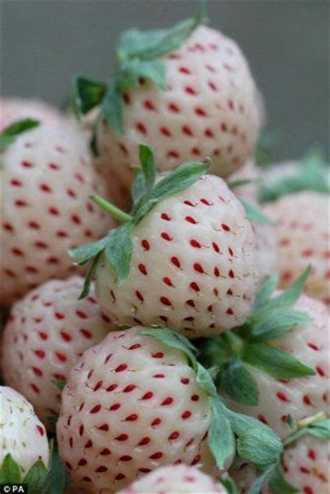 94 fruit that doesn t grow on trees 136 best images about fruit trees on the