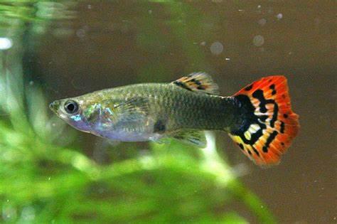The  Fish   The Wildlife