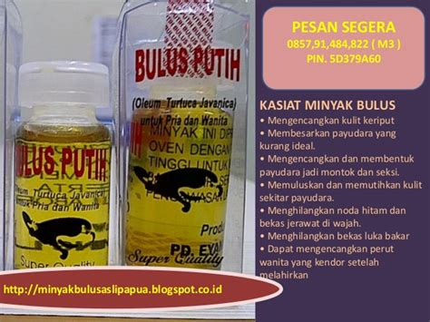 Minyak Bulus Herbal asal minyak bulus november 2012 ramuan terapi herbal