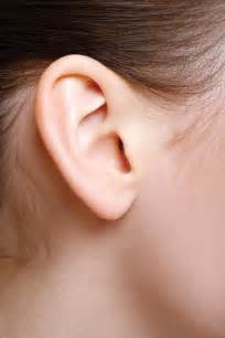 ear vestibulocochlear system