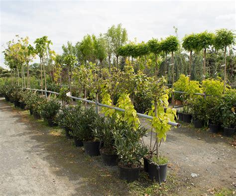 imagenes de flores y arboles 193 rboles vivero lindavista