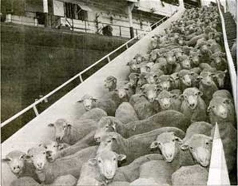Anti Sheep Mentality by Lambs To Slaughter Alanzosblog