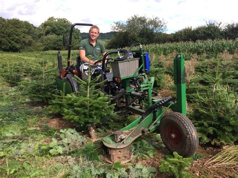 pruning christmas trees the lifecycle of growing a tree pinewood trees