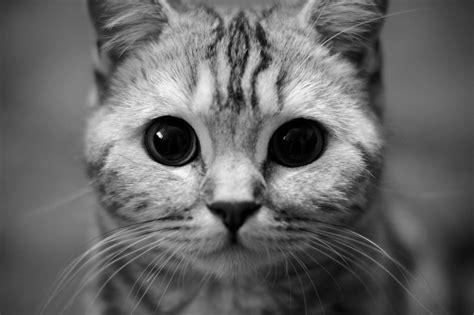 Cat Wallpaper Pack | hd cat wallpaper pack driverlayer search engine