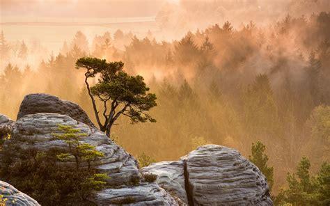 trees forest mountains mist fog sunrise sunset sunlight