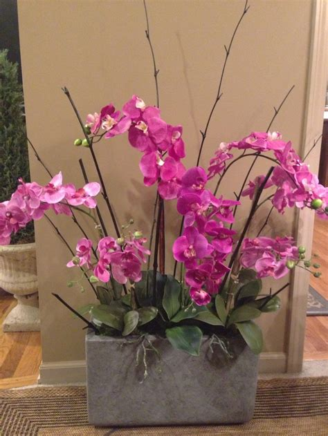 54 best images about live orchid arrangements on pinterest