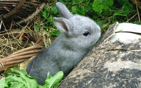morte in cause morte improvvisa coniglio domestico quali cause