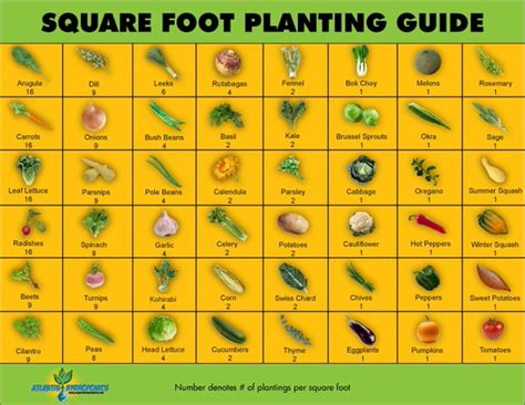 easy steps to square foot garden success the garden glove